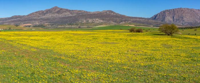 Flying the magic flower carpet – Part 2